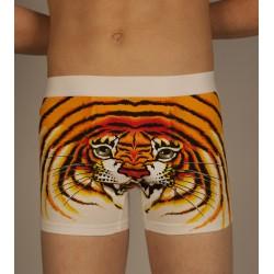 Boxeur tigre blanc