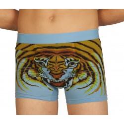 Boxer tigre bleu
